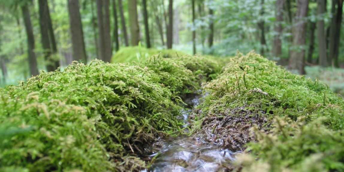 Karsthydrogeologische Übungen in der Fränkischen Schweiz