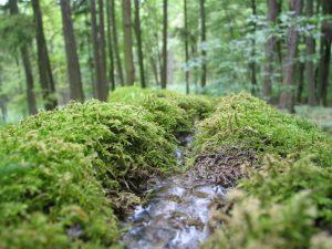 Karsthydrogeologische Übung in der Fränkischen Schweiz