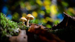 4 Mythen rund um schöne Herbstfotos